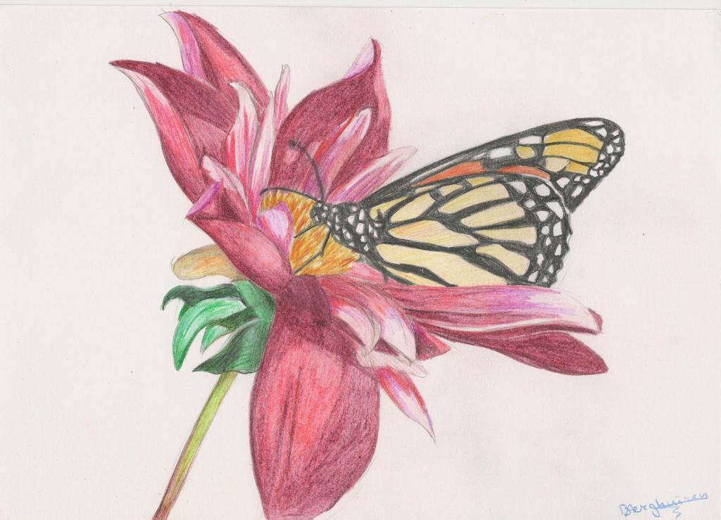 1024x739 Beautiful Drawings Of Butterflies On Flowers Butterfly Flower