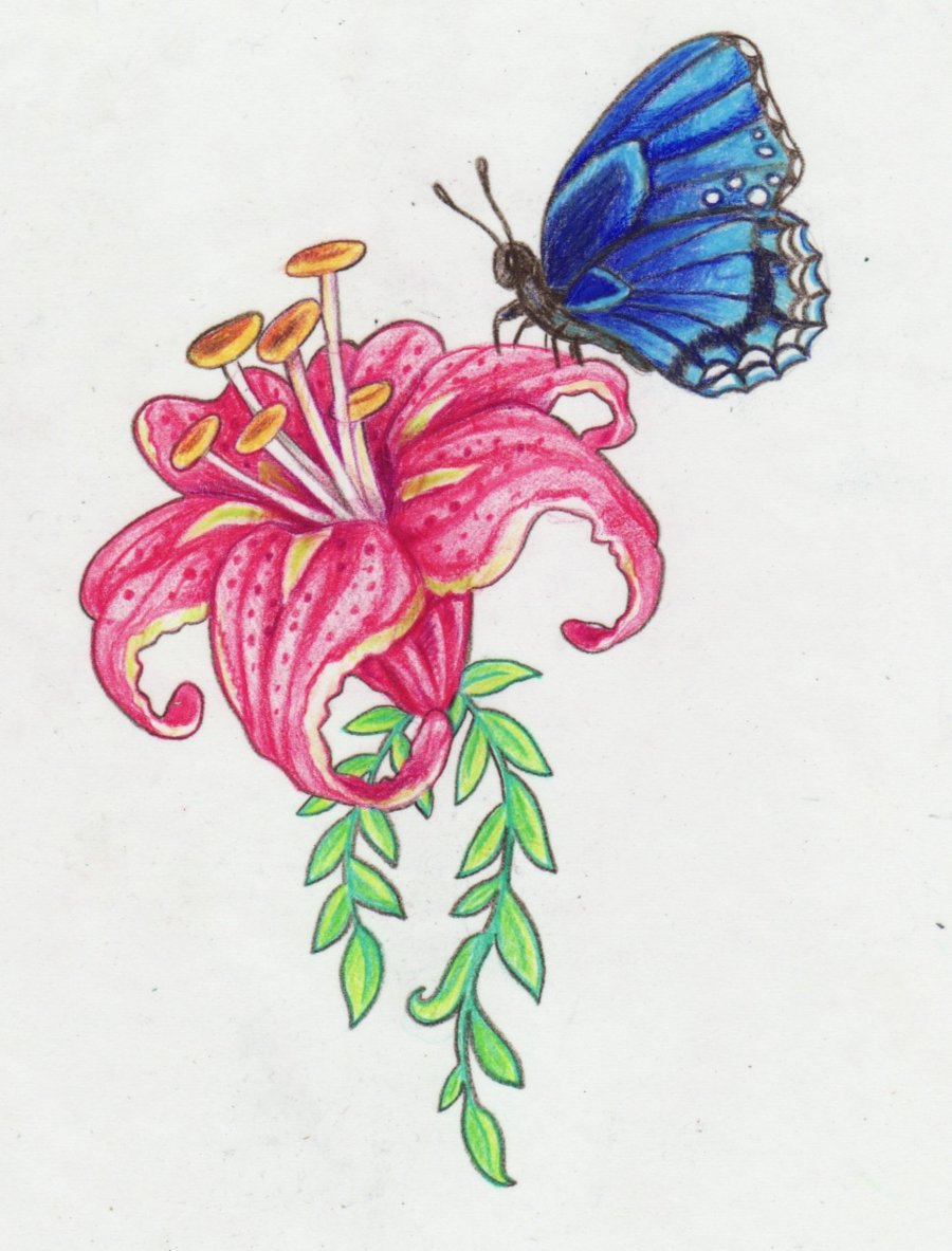 900x1183 Butterfly On Flower Drawings With Color