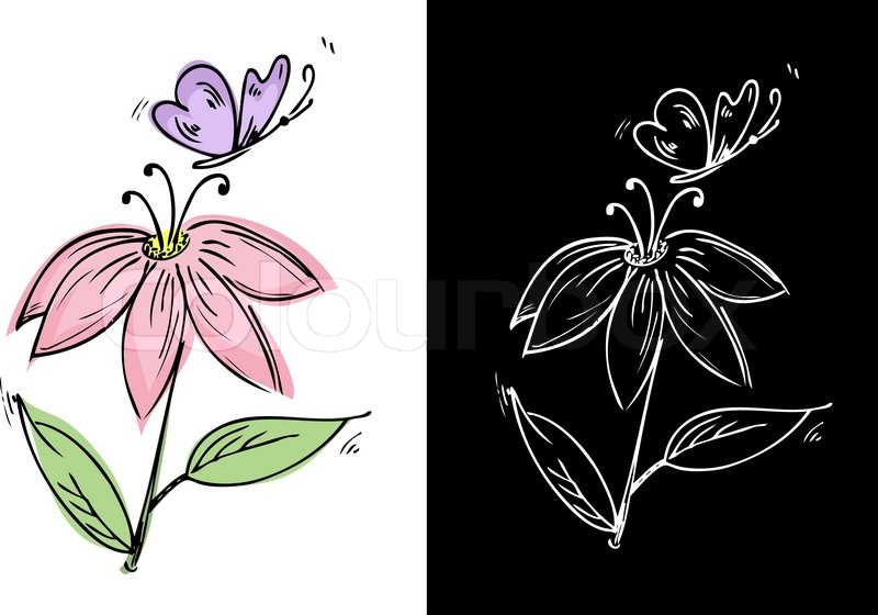 800x560 Drawing A Flower With A Butterfly Stock Vector Colourbox