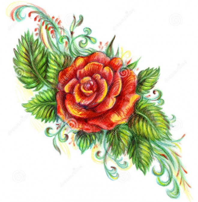 660x675 35 Beautiful Flower Drawings And Realistic Color Pencil Drawings