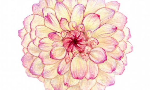 526x318 Awesome Flowers Drawing Amp Ultimate Drawing Guide