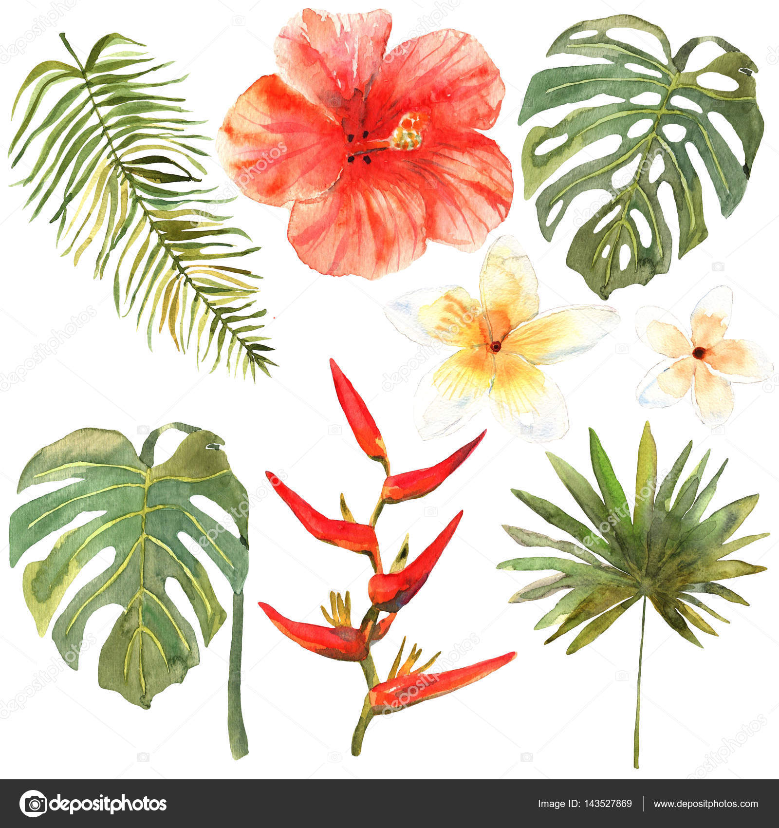 1600x1700 Floral Set. Collection With Tropical Leaves And Flowers, Drawing