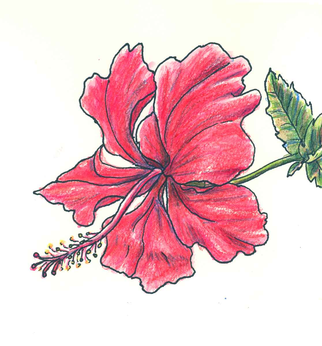 1116x1200 Nice Flower Images Flower Drawing