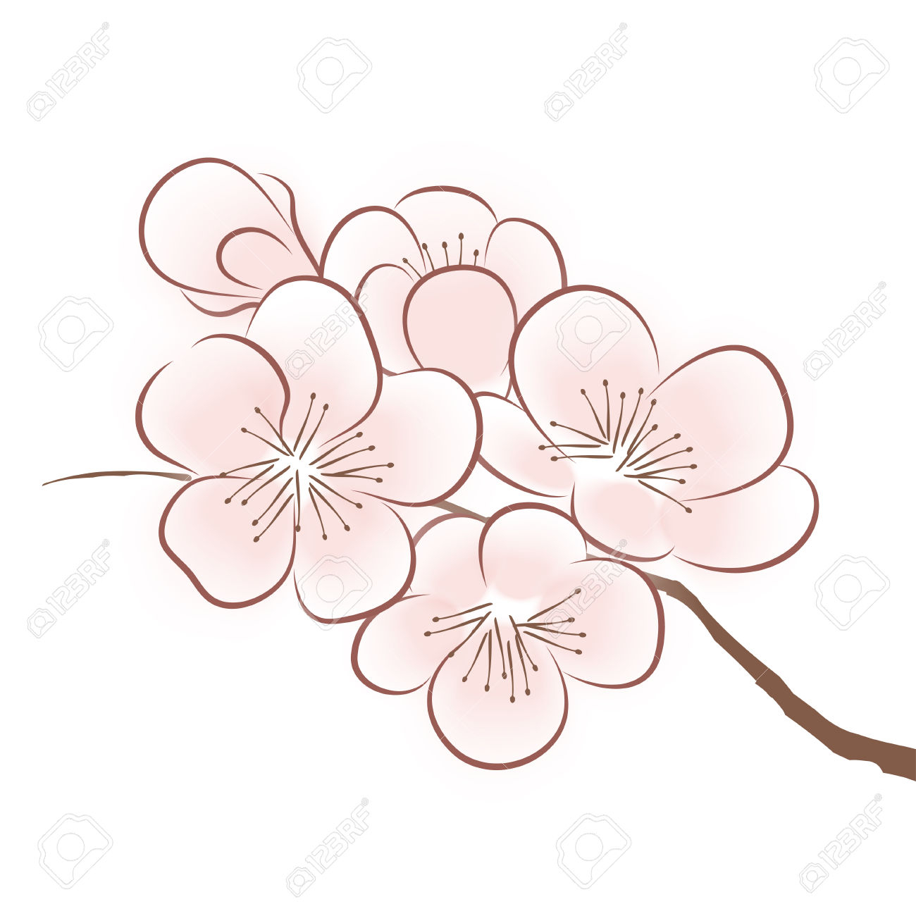 This is a picture of Impeccable Sakura Flower Drawing
