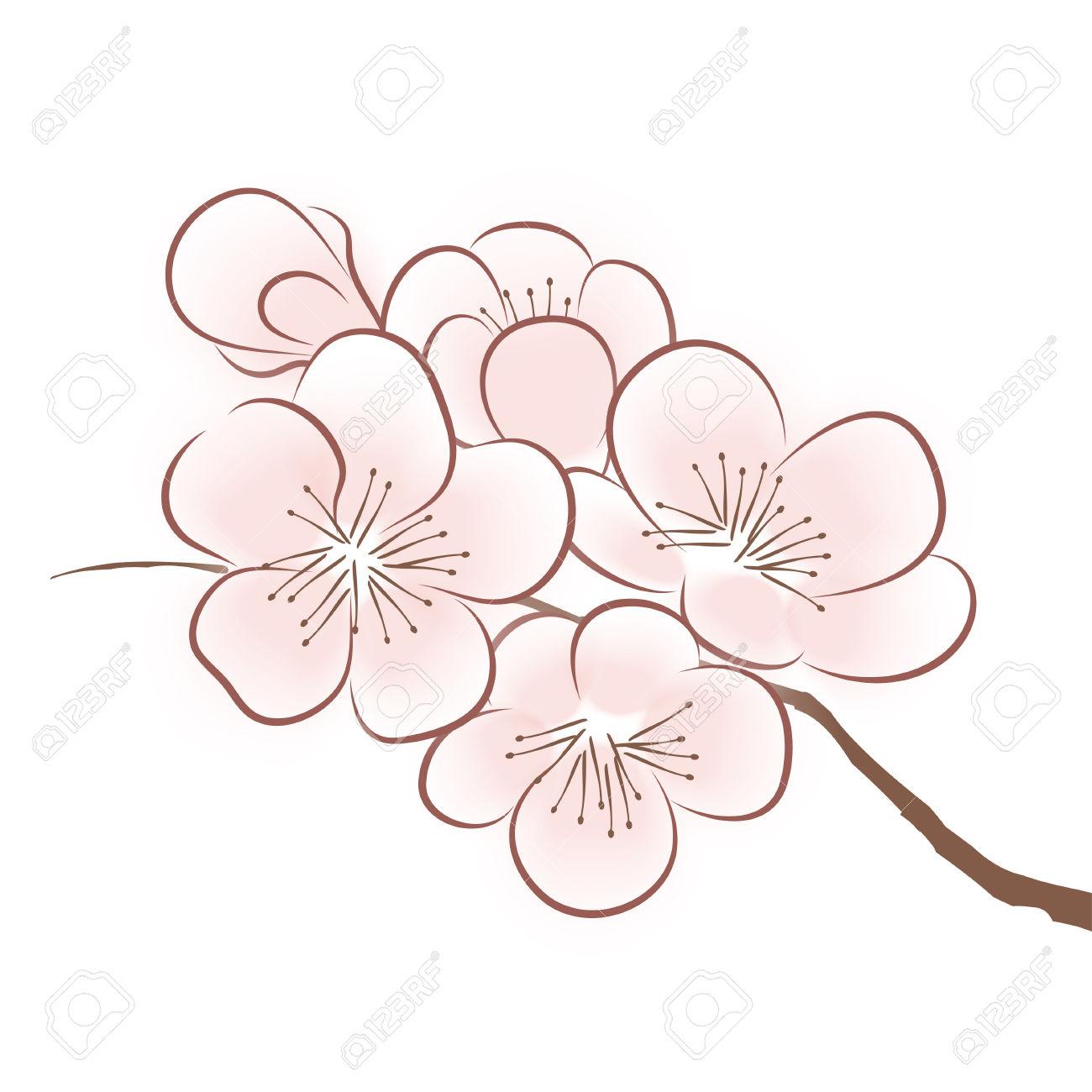 1300x1300 Sakura Flowers Drawing Drawn Sakura Blossom Sakura Flower