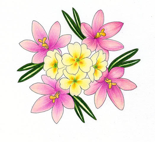 524x480 Flowers For Flower Lovers. Flowers Drawing.