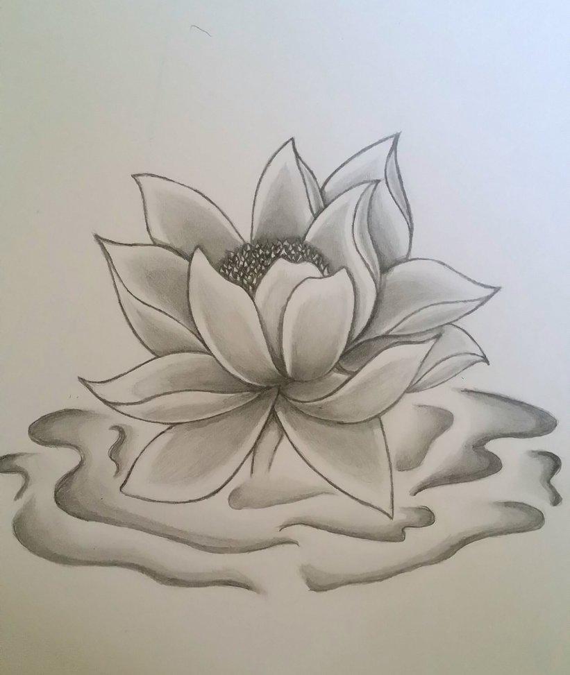 821x973 Lotus Flower Drawing In Pencil