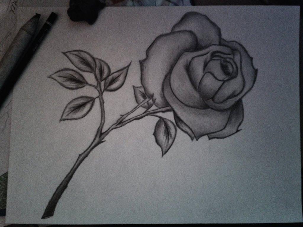 1024x768 Pencil Drawing Flowers Drawn Pencil Flower