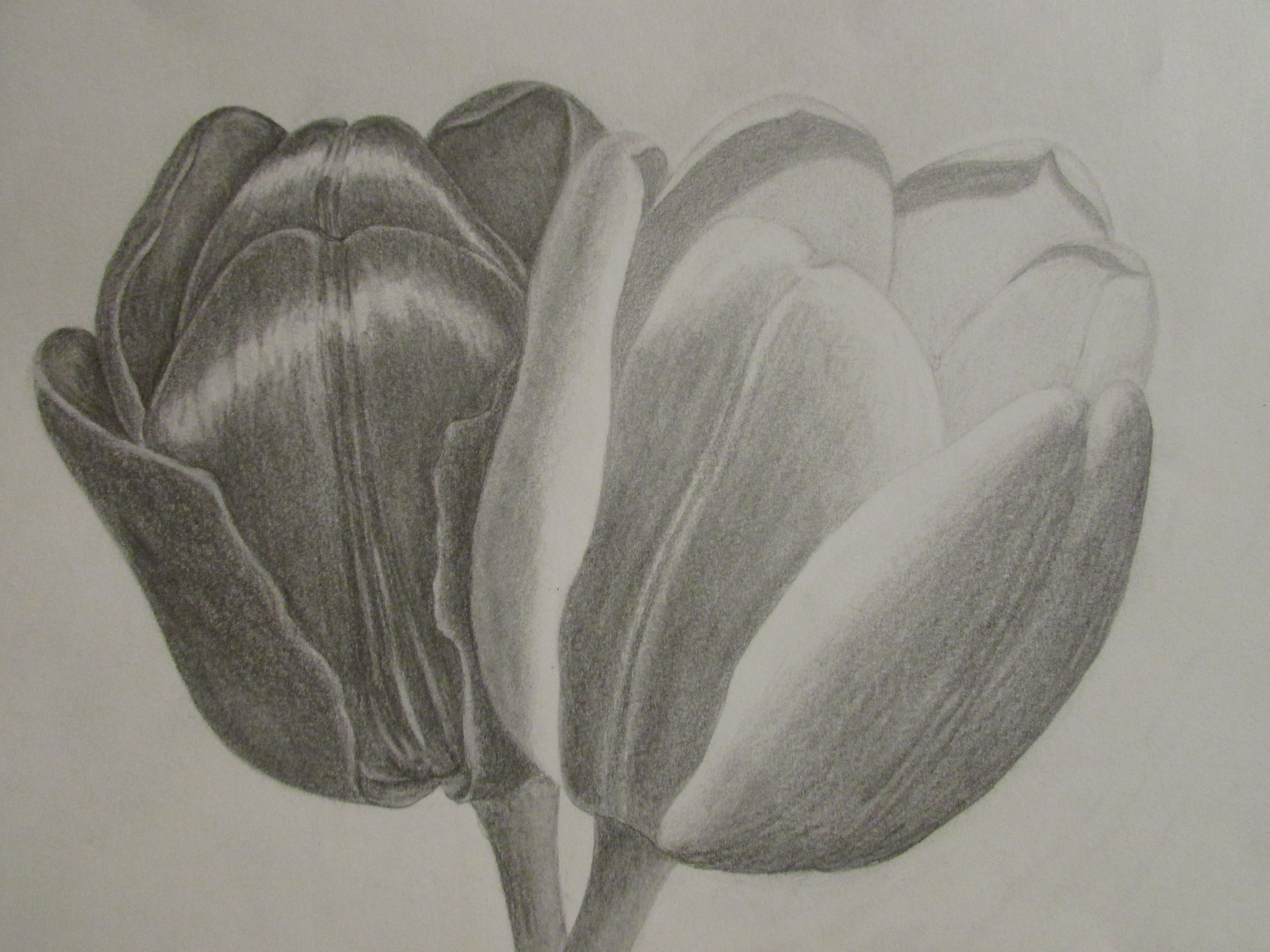 4608x3456 Pencil Shading Sketches Flowers Pencil Shading Of Flowers