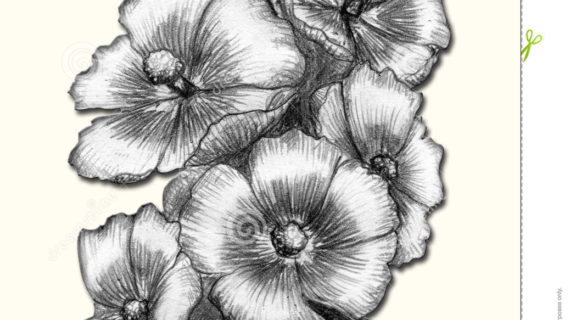 570x320 pencil sketch flower images pencil paintings of flowers