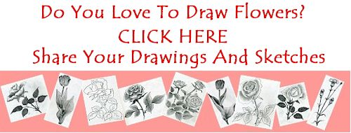 500x190 How To Draw Flowers Easily