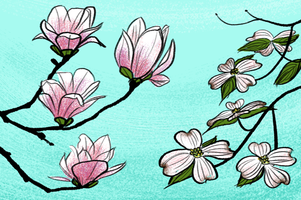 600x400 Simple Flowers Drawing Pictures