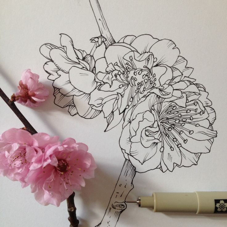 Flowers Drawing Tumblr at GetDrawings.com | Free for personal use ...