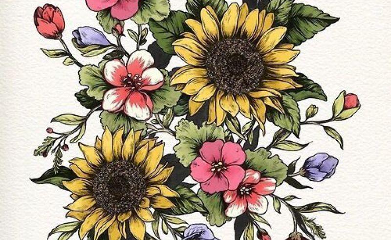 800x491 Flower Drawings Tmblr Gardening Flower And Vegetables