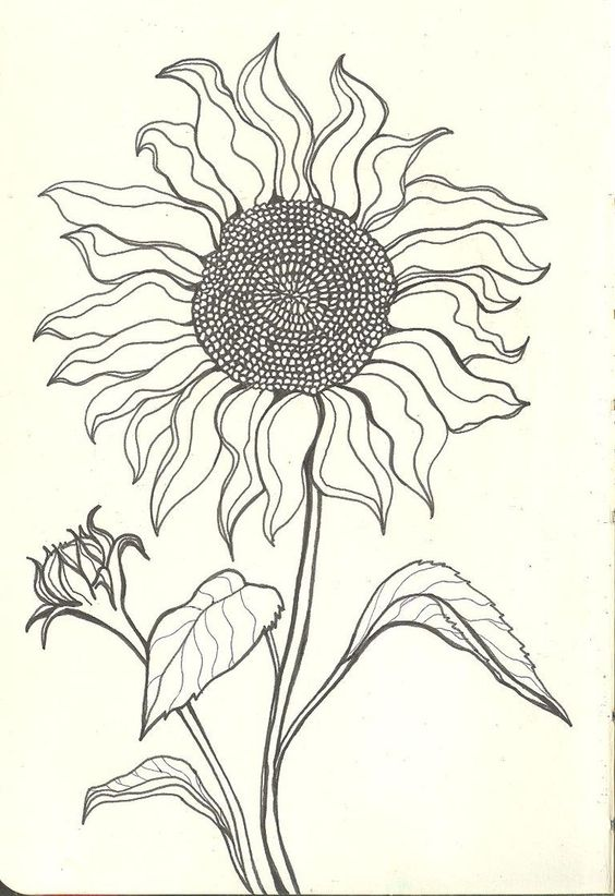 564x822 Tumblr Sunflowers Drawing Ltbgtsunflower Drawingsltgt Ltbgtsunflower