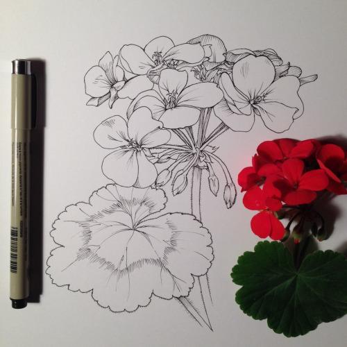 500x500 Drawing Illustration Art Artists On Tumblr Botanical Noel Badges