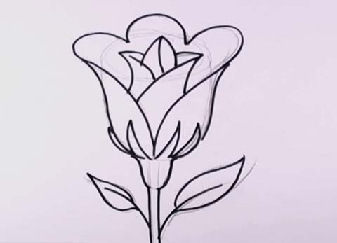 480x347 How To Draw An Open Rose