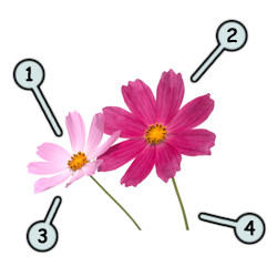 250x250 How To Draw Cartoon Flowers