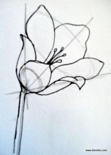 457x640 How To Draw Flowers