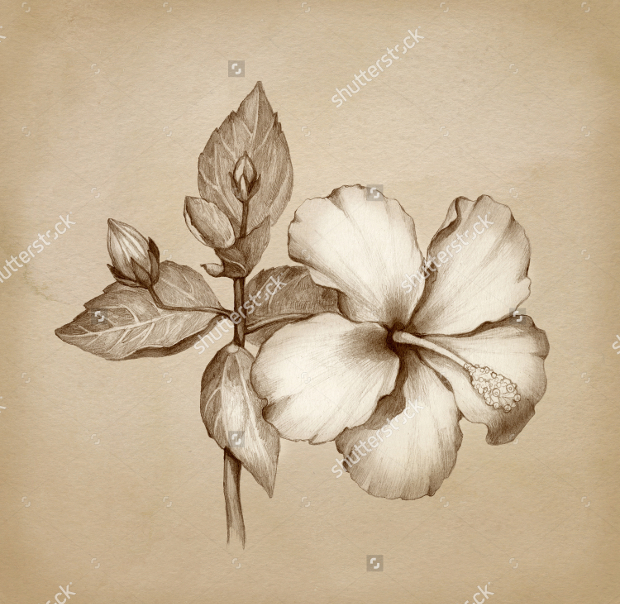 620x604 Flower Drawings, Sketches Design Trends