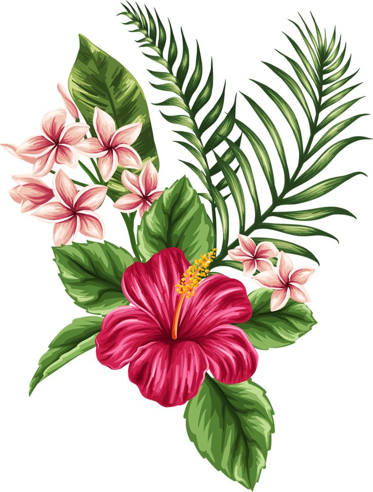 736x971 Tropical Flower Drawing
