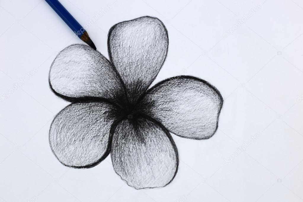 1023x682 I Pencil Drawing Of Flowers Stock Photo Wongchai1972