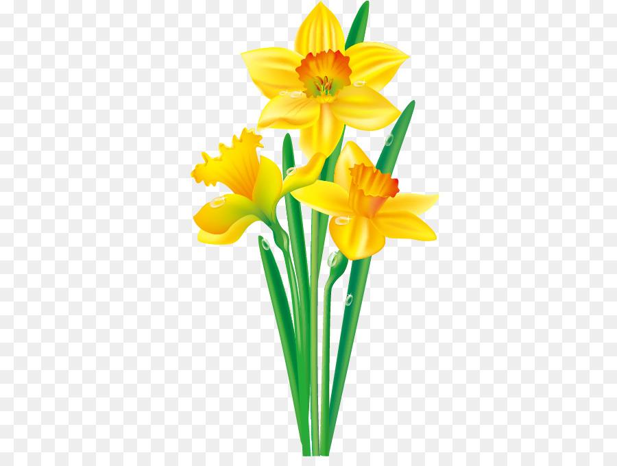 900x680 Daffodil Flower Drawing Clip Art