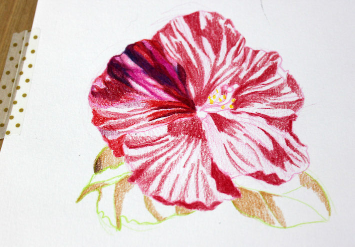 710x493 Drawing Flowers With Colored Pencils 5 Simple Steps