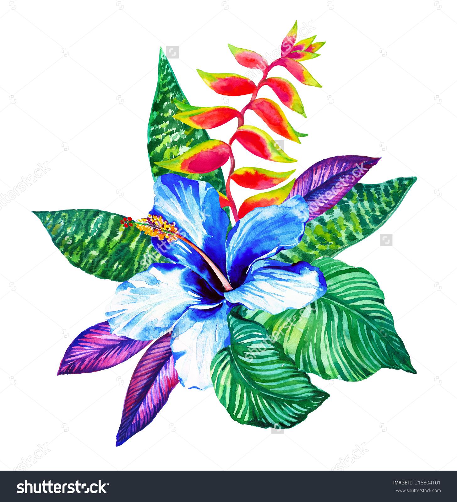 1455x1600 Tropical Flower Drawings Flowers Drawing