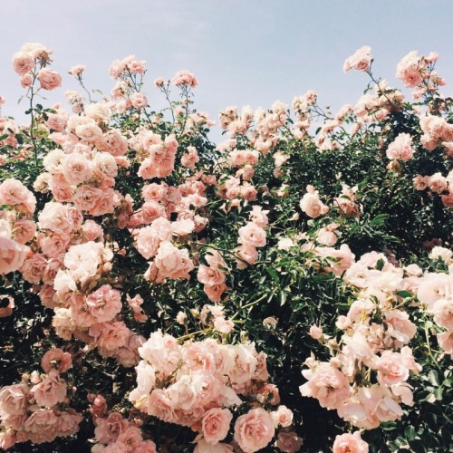 500x500 Photos Tumblr Flower,