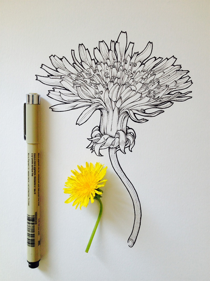 800x1067 Eletragesi Daisy Tumblr Drawing Images