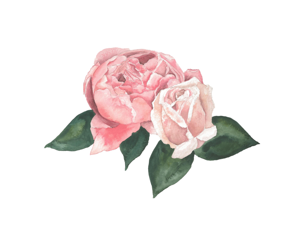 1280x1006 Hoontoidly Roses Tumblr Drawing Images
