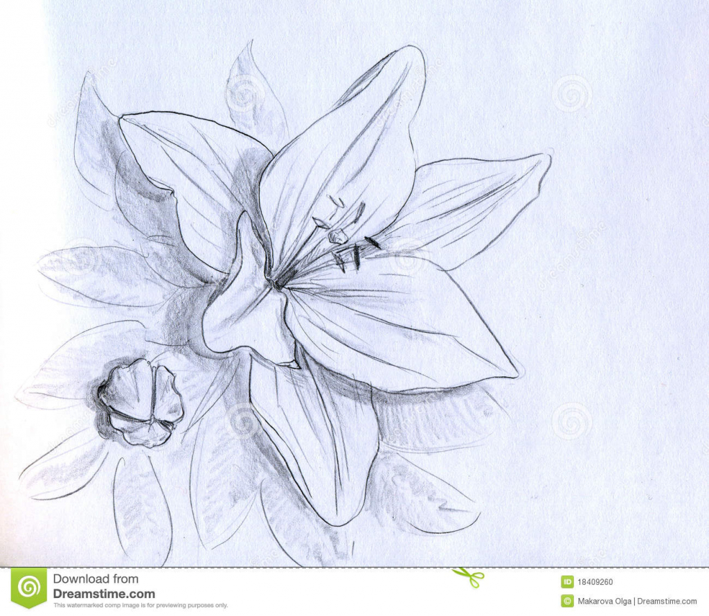 1024x889 3d Flowers Pencil Drawing Amazing Pencil Drawings Of Flowers