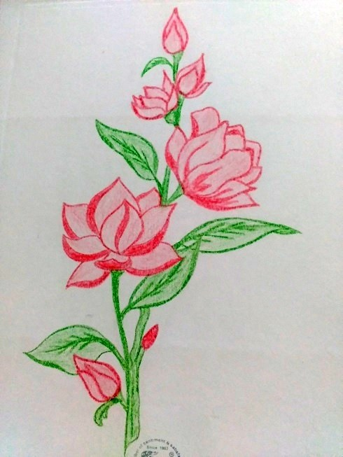 490x653 How To Draw With A Colour Pencil