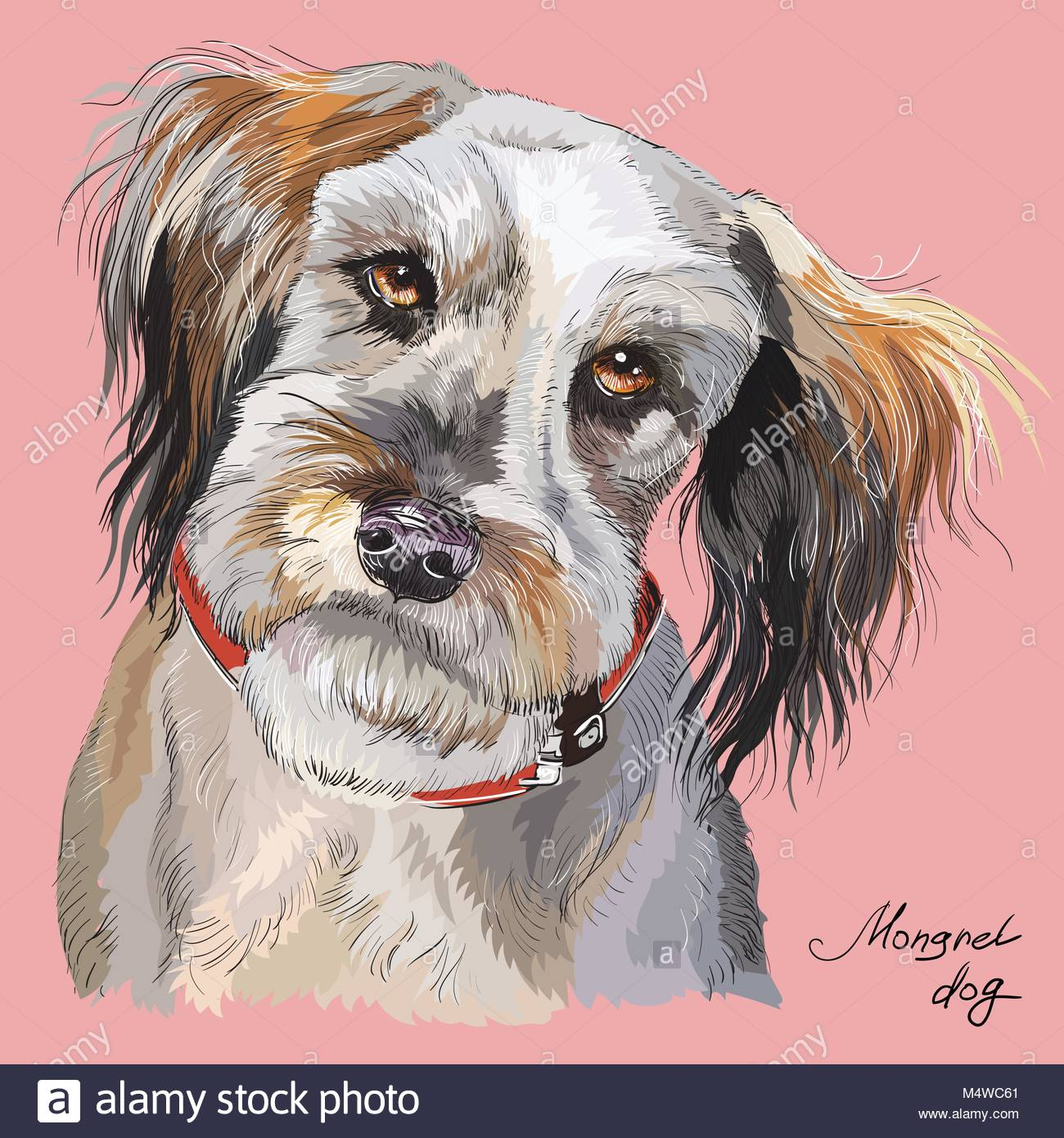 1300x1390 Fluffy Mongrel Dog Vector Hand Drawing Illustration In Different