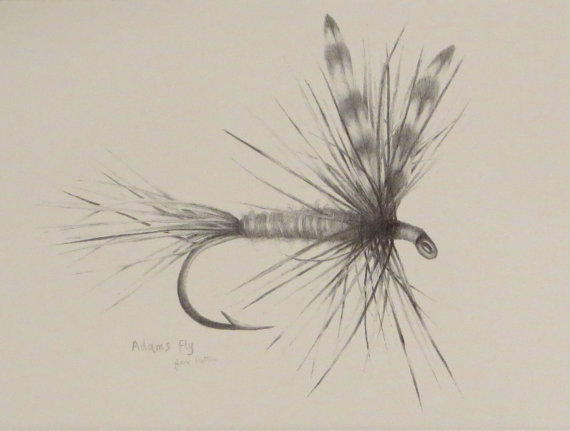570x431 Fly Fishing Drawing Adams Fly Pattern Print Fishing Art