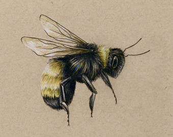 340x270 Bee Drawing Etsy
