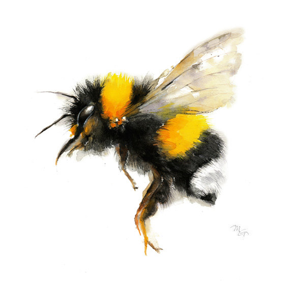 570x570 Bee Watercolor Painting Bumble Bee Art Print. Nature