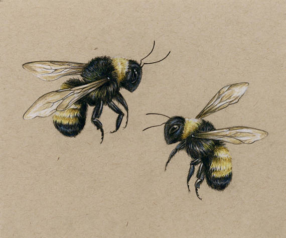 570x474 Bees Art Print Drawing Colored Pencil Lover Bees Flying