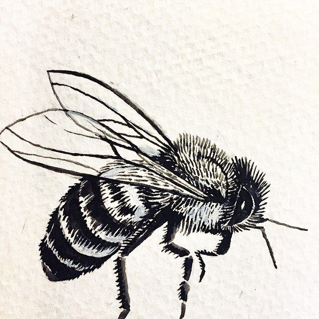 640x640 Honeybee Sketch For Cap Ink Sketches, Cap And Tattoo