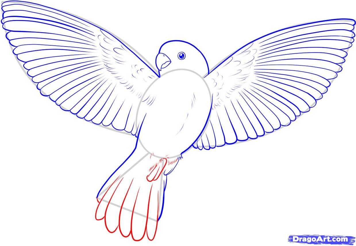 1239x857 Bird Flying Drawing How To Draw A Flying Bird, How To Draw A Bird