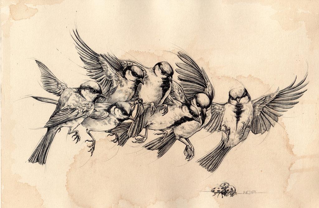 1024x669 Bird Flying Study By Noiaillustration