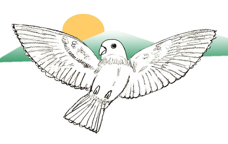 Flying Bird Drawing At Getdrawings Com Free For Personal