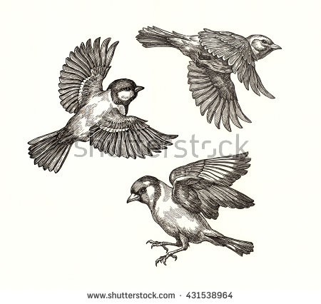 450x426 Image Result For Flying Bird Drawing Tattoo Ideas