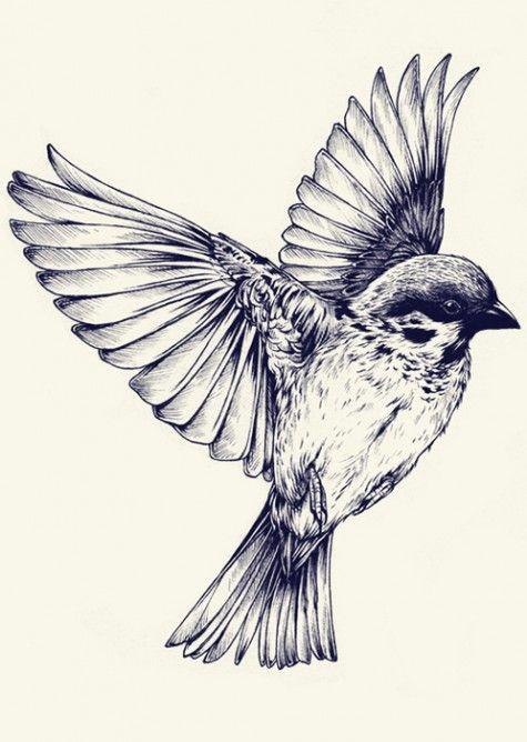 475x668 Ink And Pen Bird. Teagan White Tattoos Bird