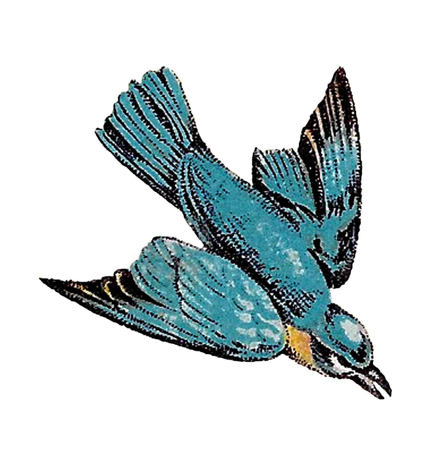 1521x1600 Antique Images Flying Birds Drawings Blue Jay Artwork Animal