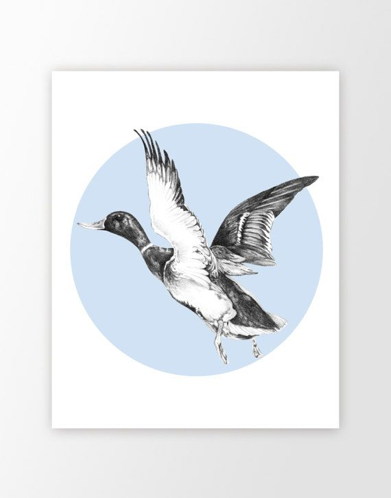 570x725 Duck wall art print  +custom+color+mallard+duck+pencil+drawing+