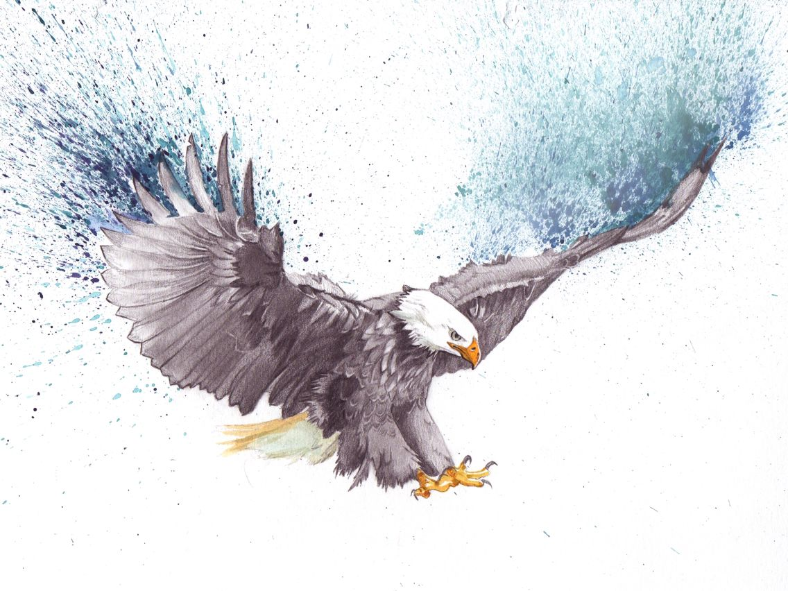 Flying eagle pencil drawing at getdrawings free for personal 1136x852 bald eagle drawing altavistaventures Image collections