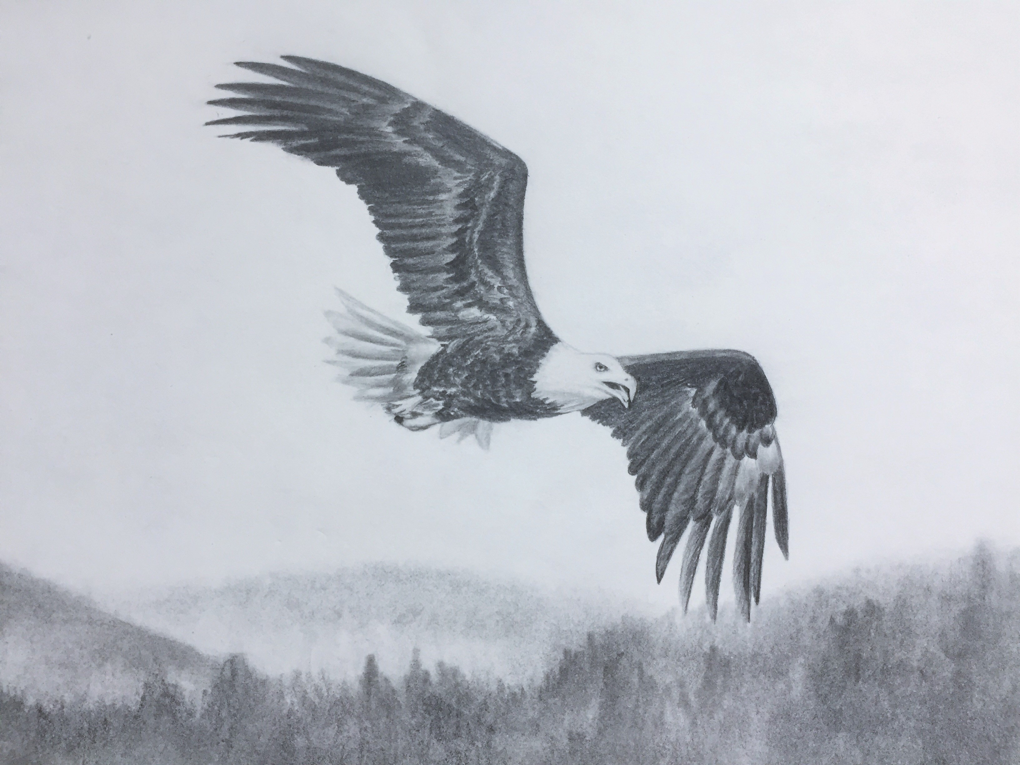 Flying Eagle Pencil Drawing