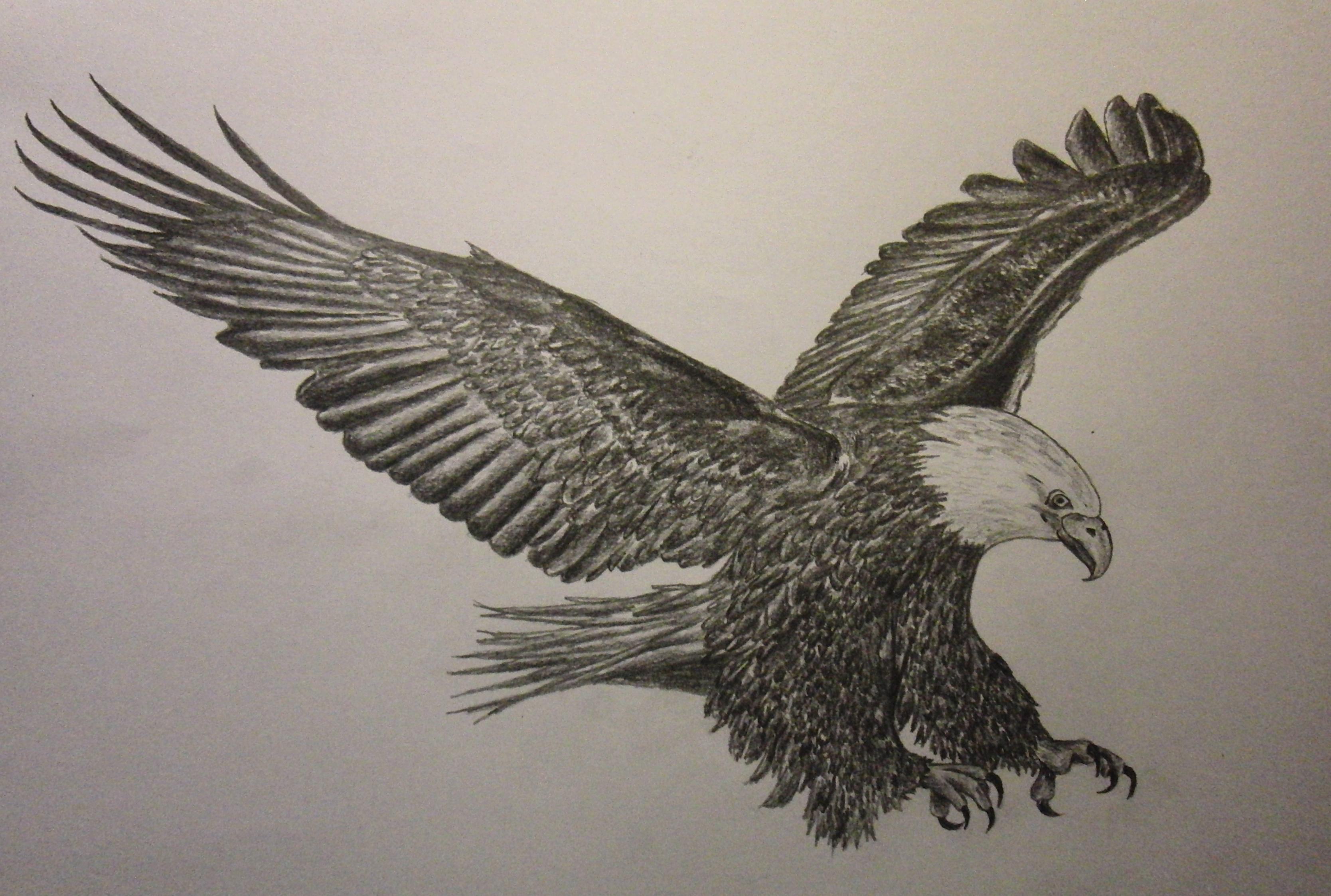 3336x2246 Eagle Flying Pencil Sketch Eagle Flying Pencil Sketch Flying Eagle
